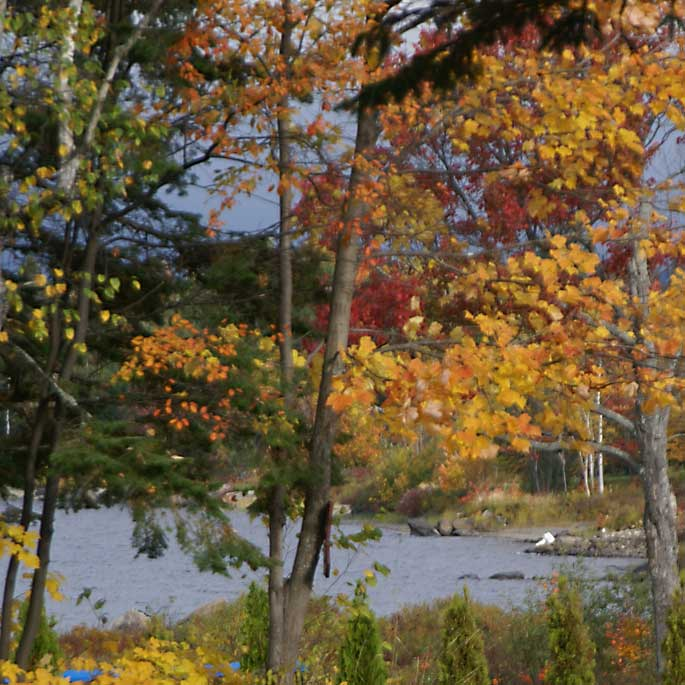 Fall Foliage Maine